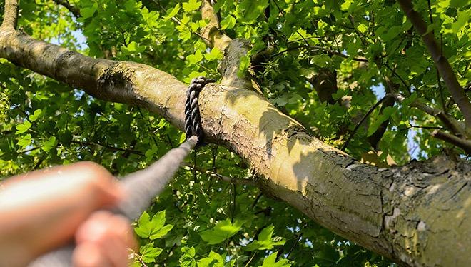 канат на дереве