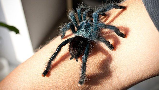 паук на руке человека